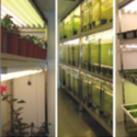 Aralab Walk-In Plants